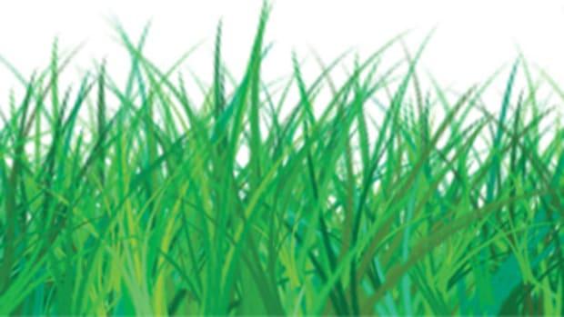 grass_banner