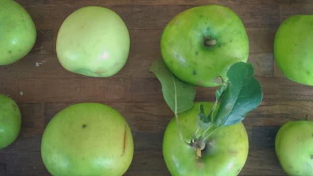 apple banner