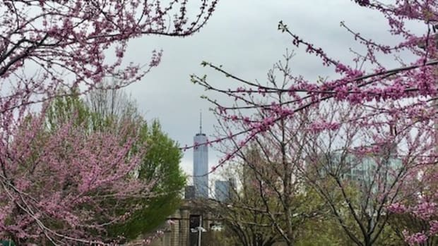 spring time in NYC
