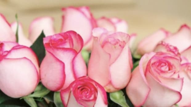 rosesbanner