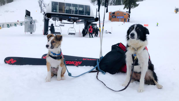 Squaw Alpine Rescue Dogs