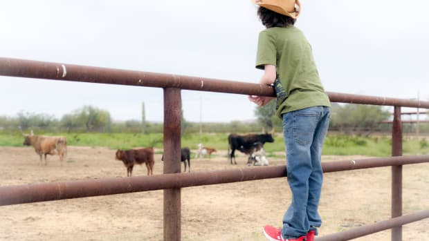 kid looking at cows on a ranch