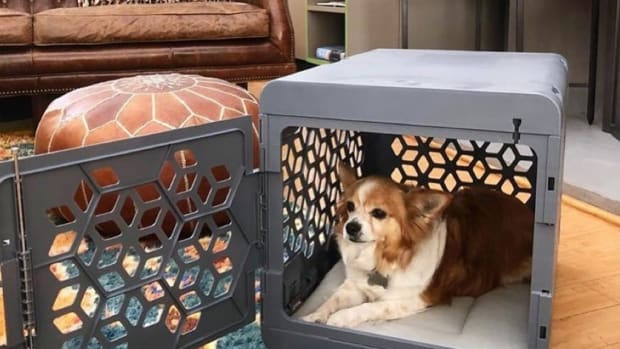 Finding the Perfect Dog Crate