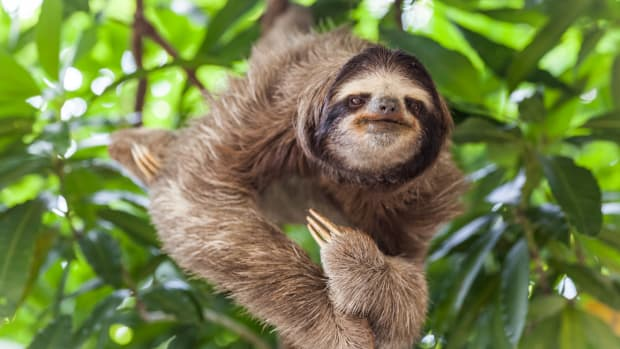 How to Celebrate International Sloth Day