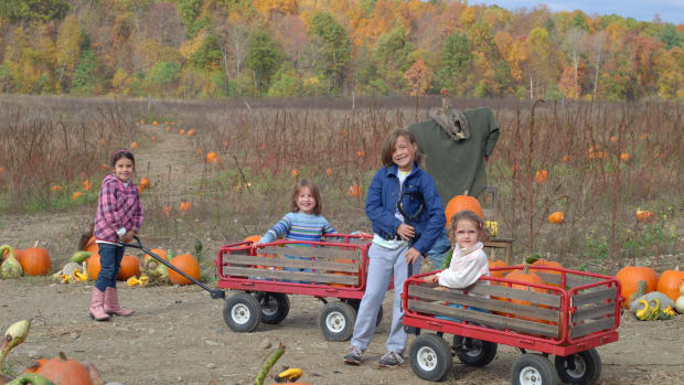 Five Tips for the Perfect Pumpkin Patch Visit 1