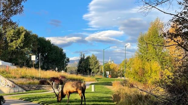 Plan a Visit to Estes Park, Colorado