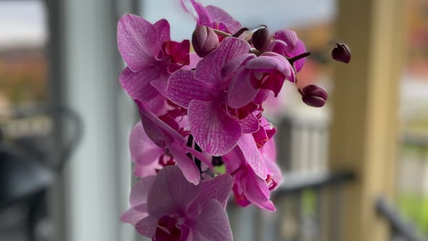 How to Care For Your Orchid to Keep it Alive