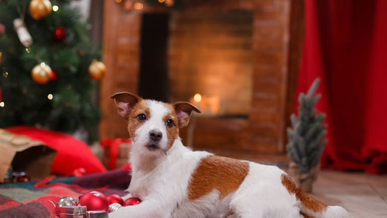 Holiday Safety Tips for Dogs and Puppies