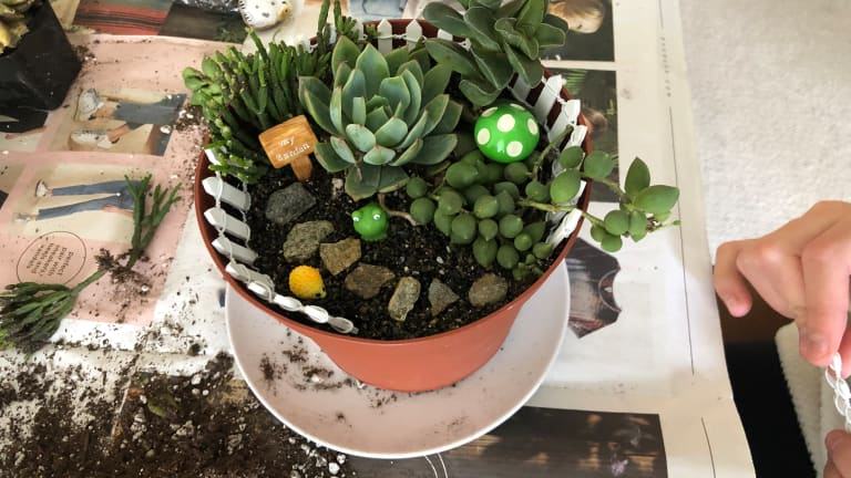 Celebrate Earth Day with a Succulent Garden