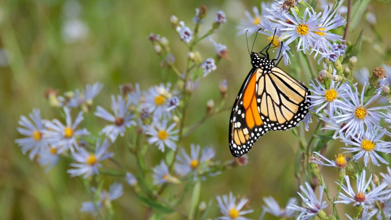 Butterfly Fever: Summer Fashion Trend