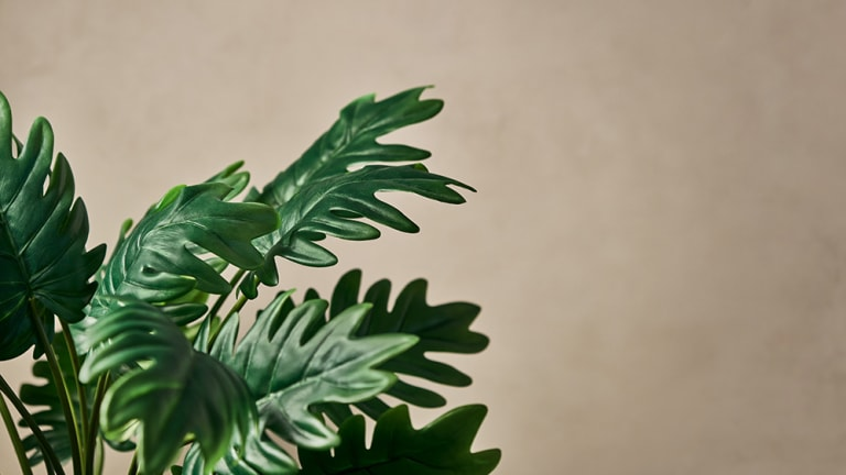 The Most Amazing Faux Plants for Your Home