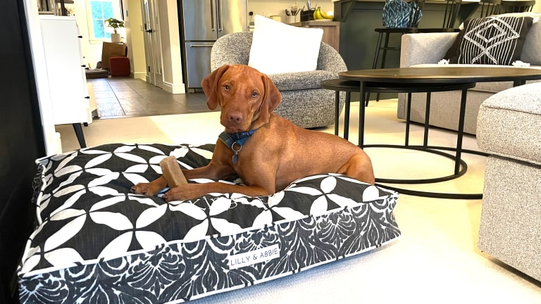 Finding a Stylish Dog Bed For Your Home