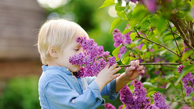 seasonal allergies, allergies, dealing with allergies, how to deal with allergies, allergic reactions, spring allergies, hay fever, springtime allergies, tips on dealing with spring allergies, lolleez, boiron
