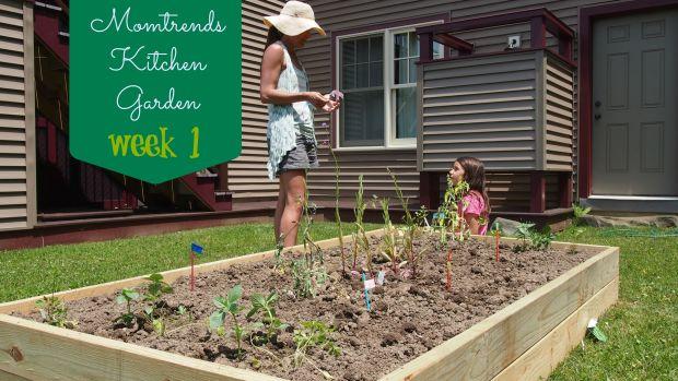 kitchen garden, healthy eating, gardening with kids
