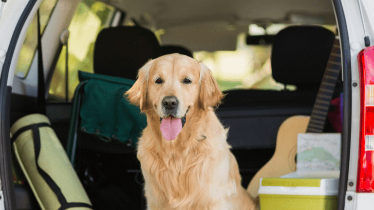 "How to ""Road Trip"" With Your Furry Kids"