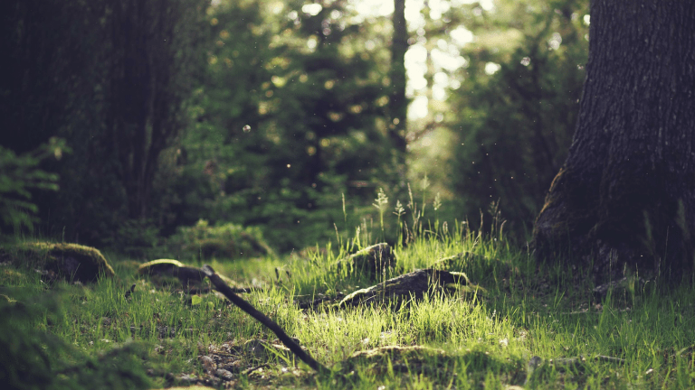 Find Your Zen with Forest Bathing