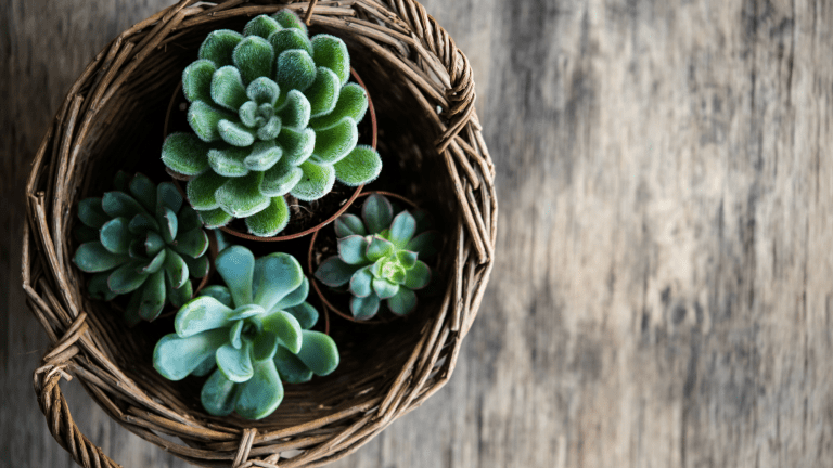How to Use Houseplants