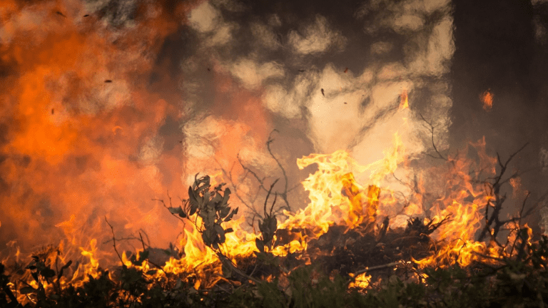Wildfire Safety: How to Stay Safe Living in a Fire Zone