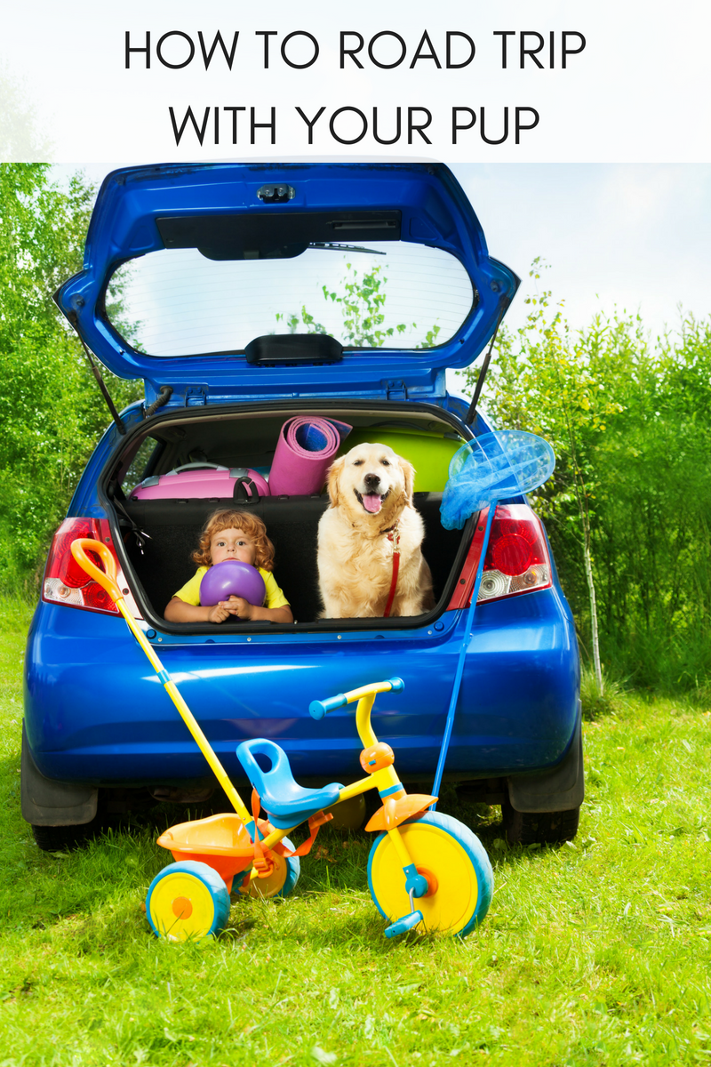 HOW TO ROAD TRIP WITH YOUR PUP
