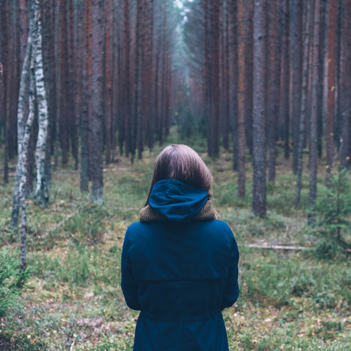 forest bathing trend, trend for wellness, wellness trend, mindfulness trend, nature, japanese forest bathing, shinrin-yoku, forest bathing therapy