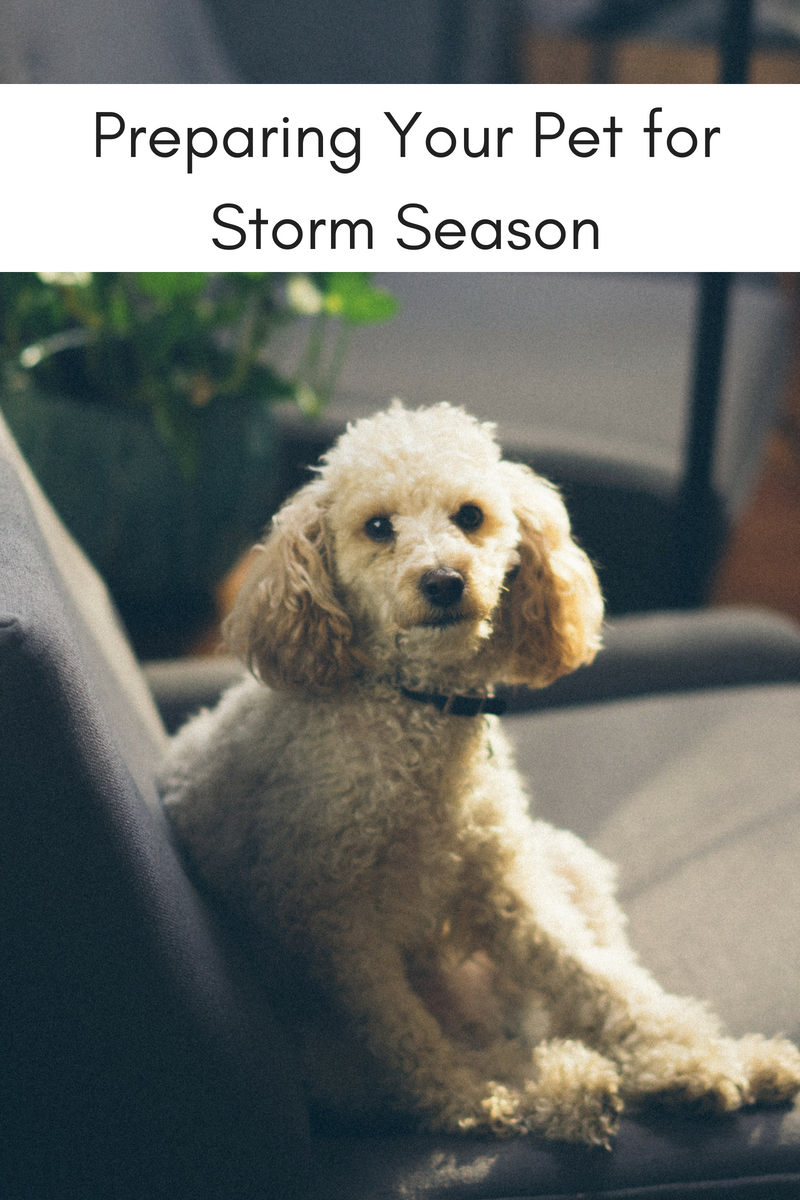 Preparing Your Pet for Storm Season
