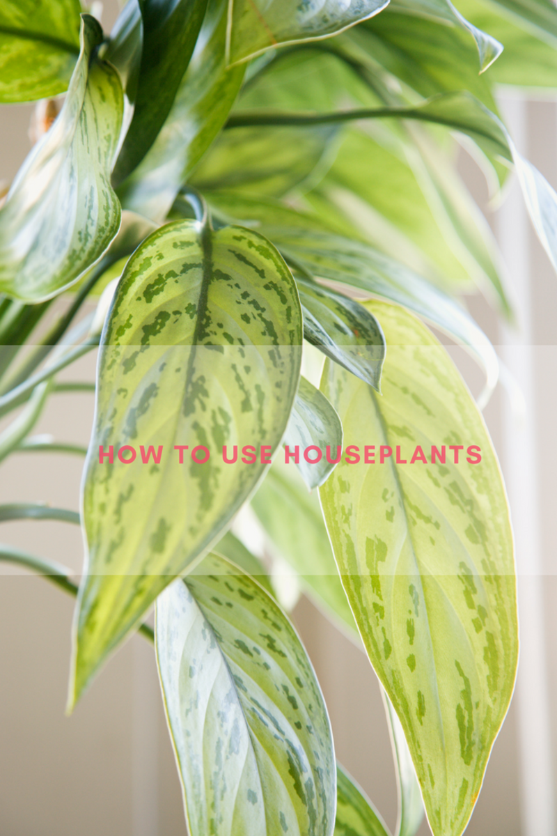 how to use houseplants, decorating with houseplants, which houseplants should i buy, buying houseplants, houseplants, guide to houseplants, houseplants guide, using houseplants, houseplants for cleaner air, cleaner air, indoor air quality