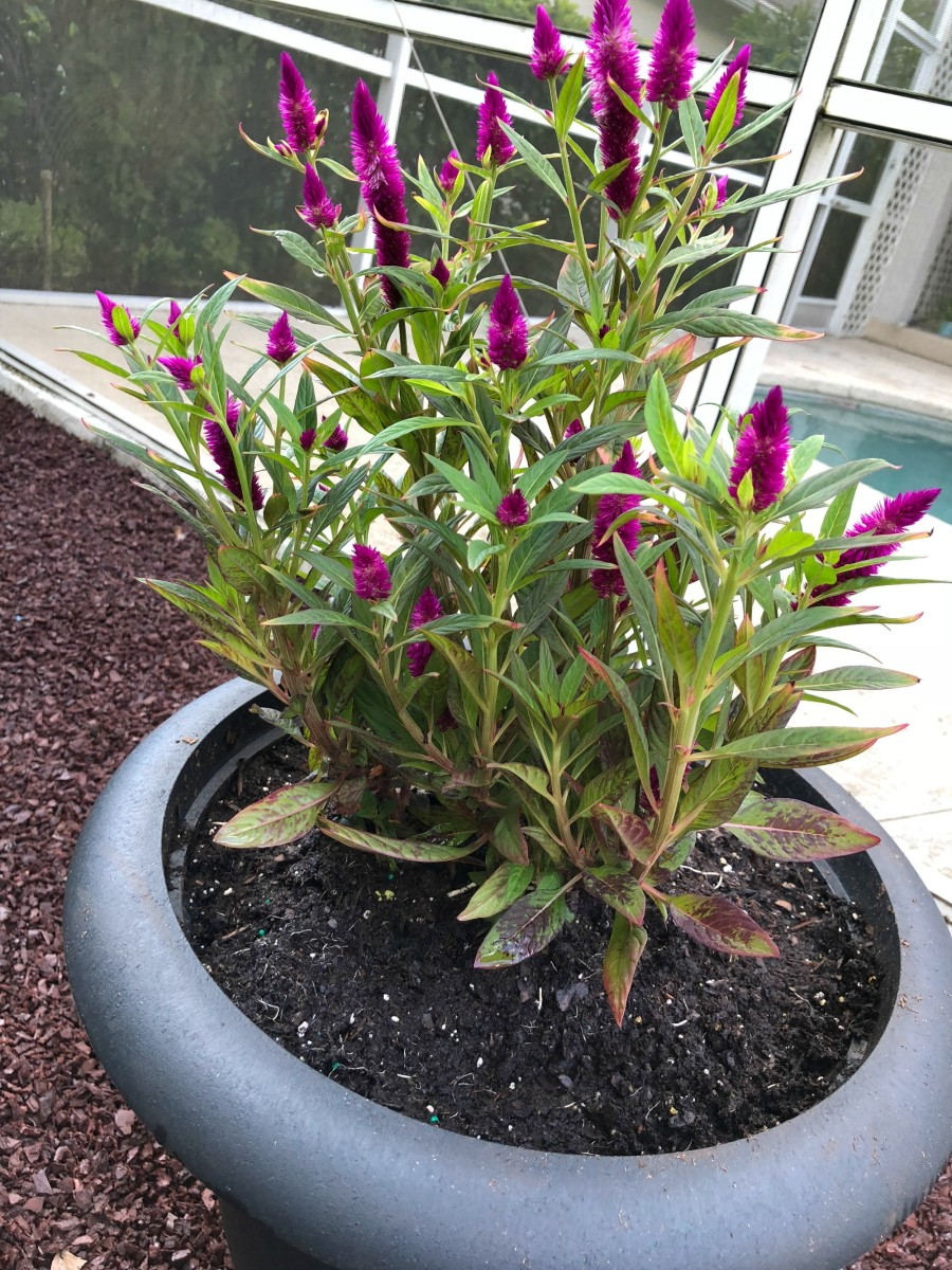 planter with flowers