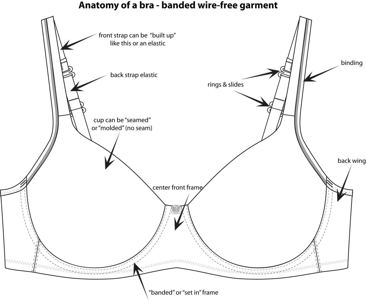 anatomy of a bra illustration