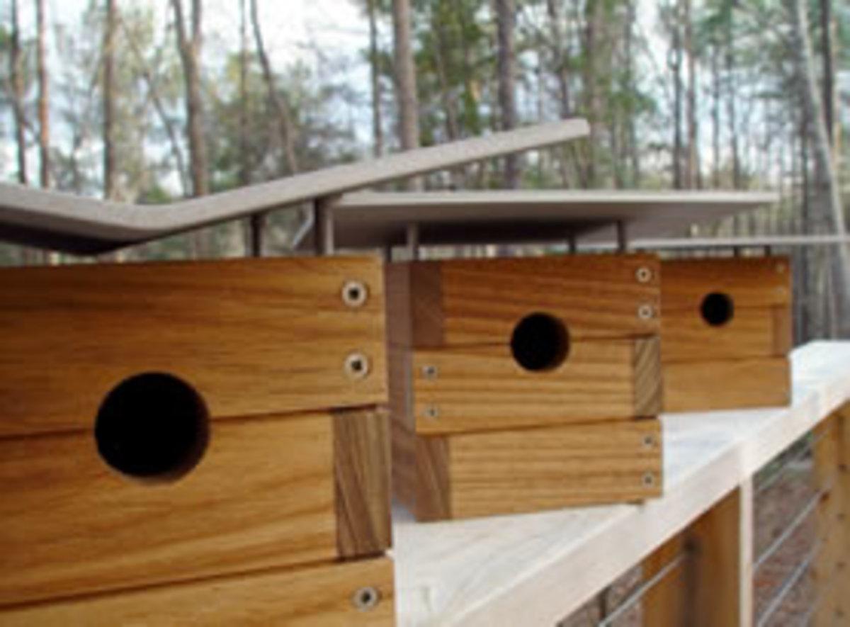 modern-birdhouses_lineup