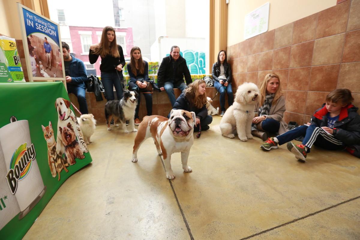 Bounty Pet Event