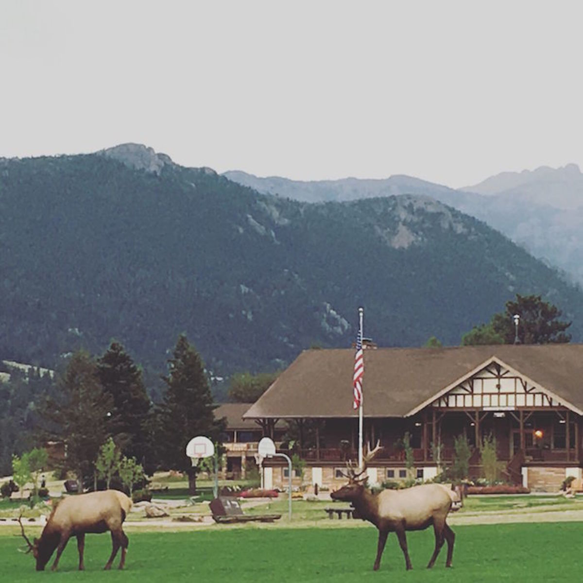 estes-park-ymca-elk-colorado-rockies