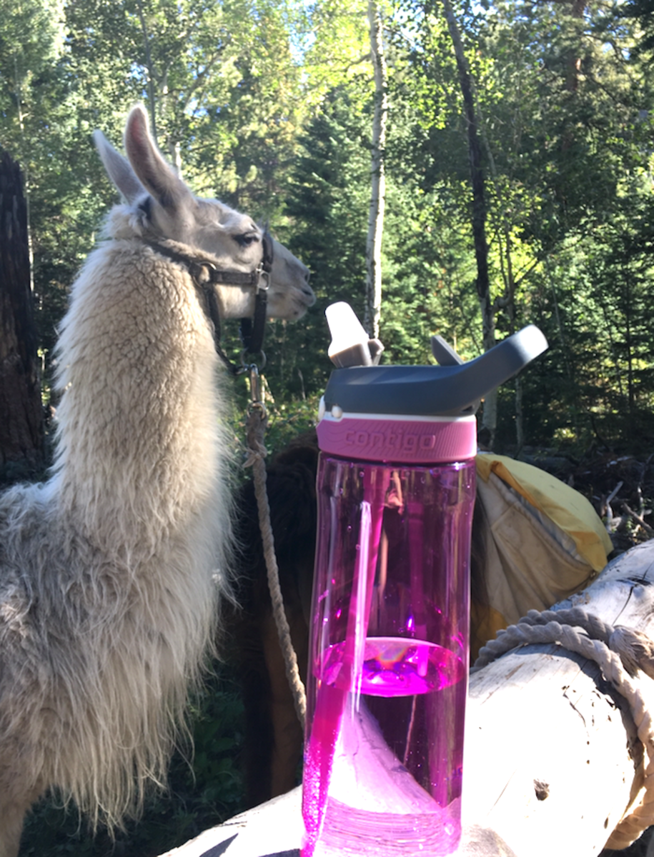 contigo-water-bottle-colorado-estes-park