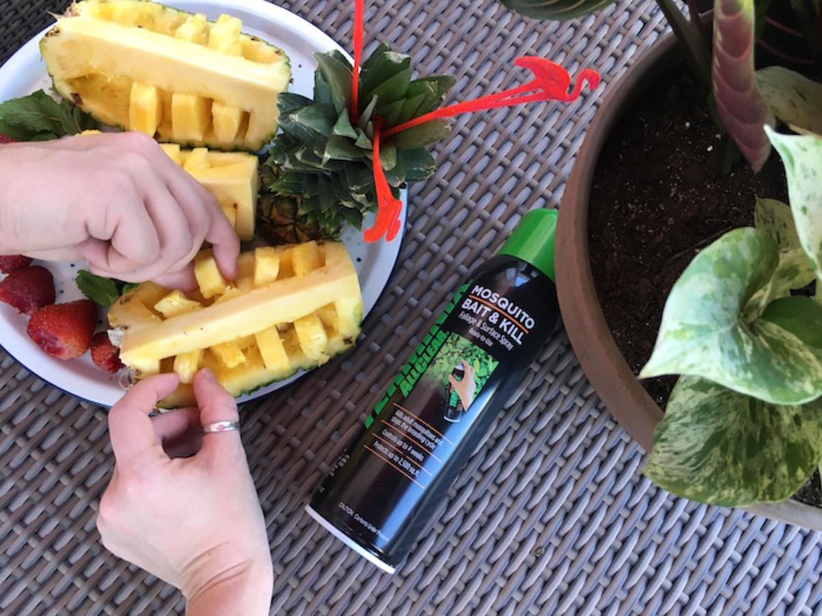 pineapple summer mosquitos terminix bait&kill