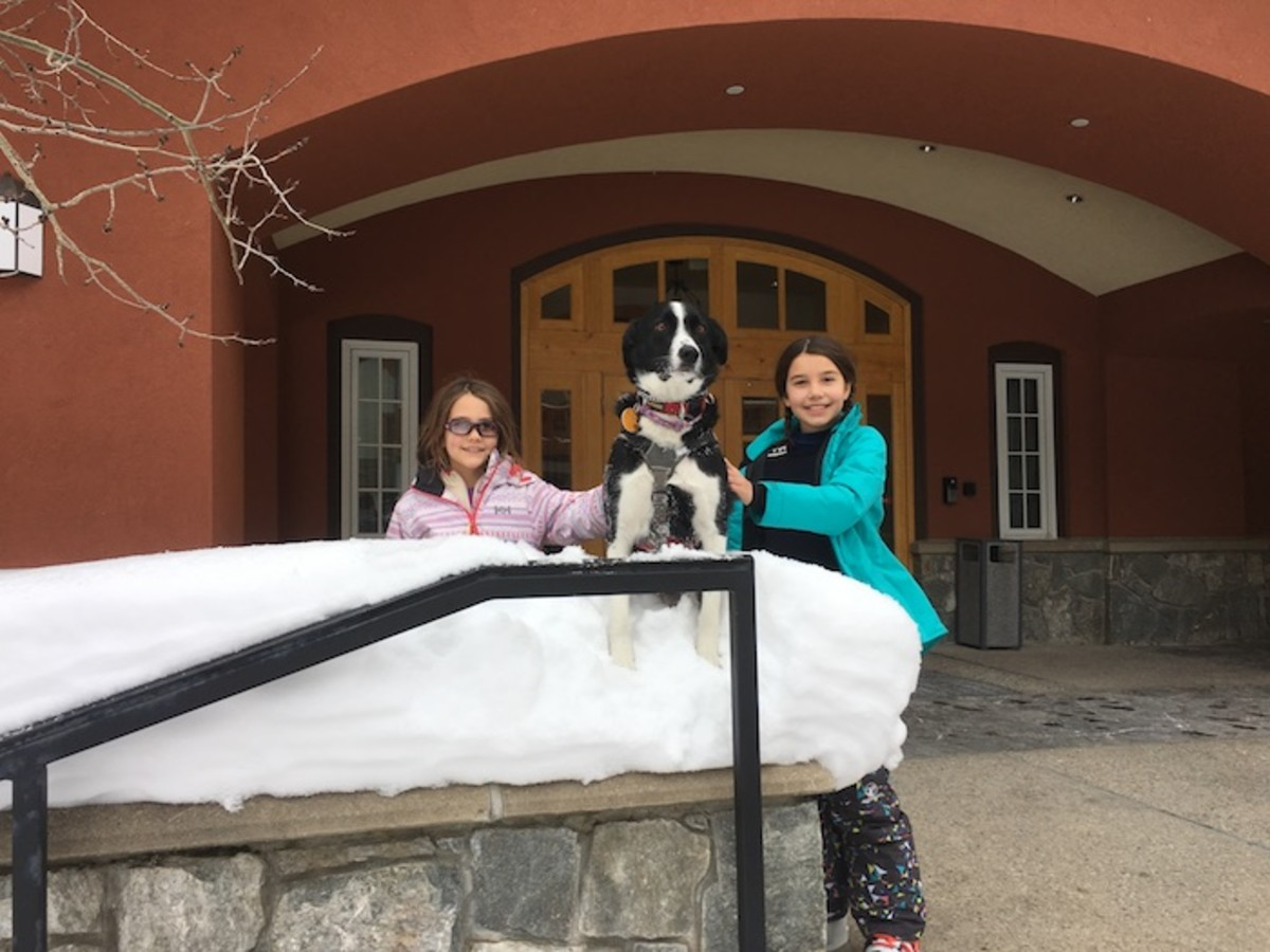 Patrol dog ski solitude