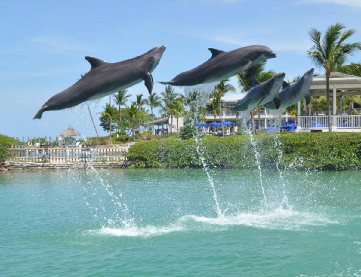 hawks cay resort, florida keys, ducks kay, resort, florida resort, dolphin connection, tropical vacation, family resort