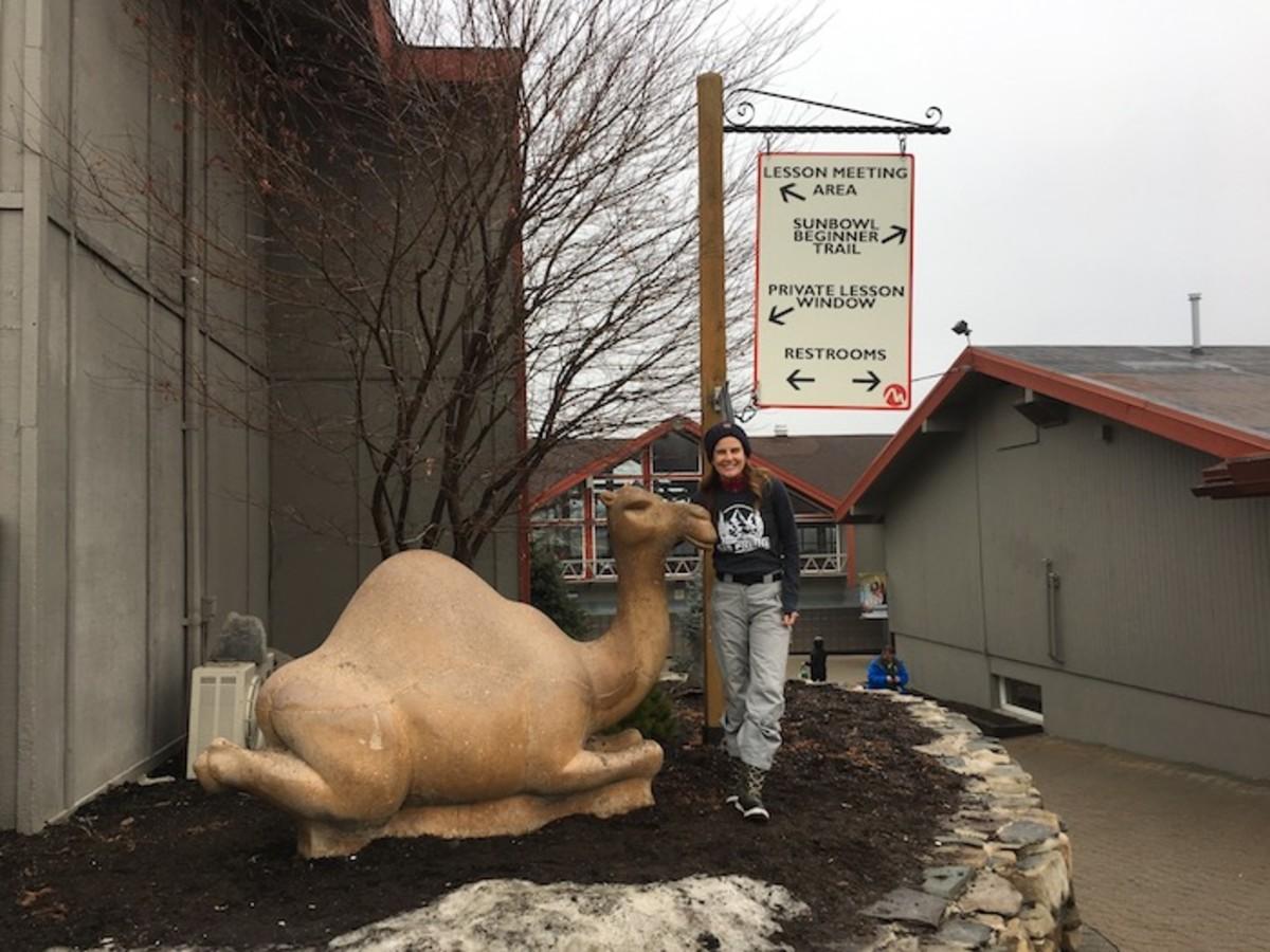 camelback camel