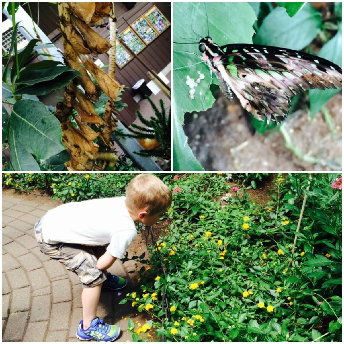 butterfly place MA