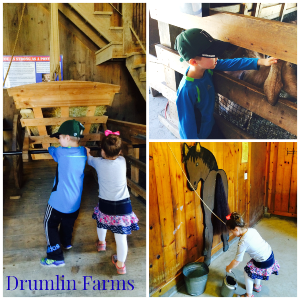 drumlin farms