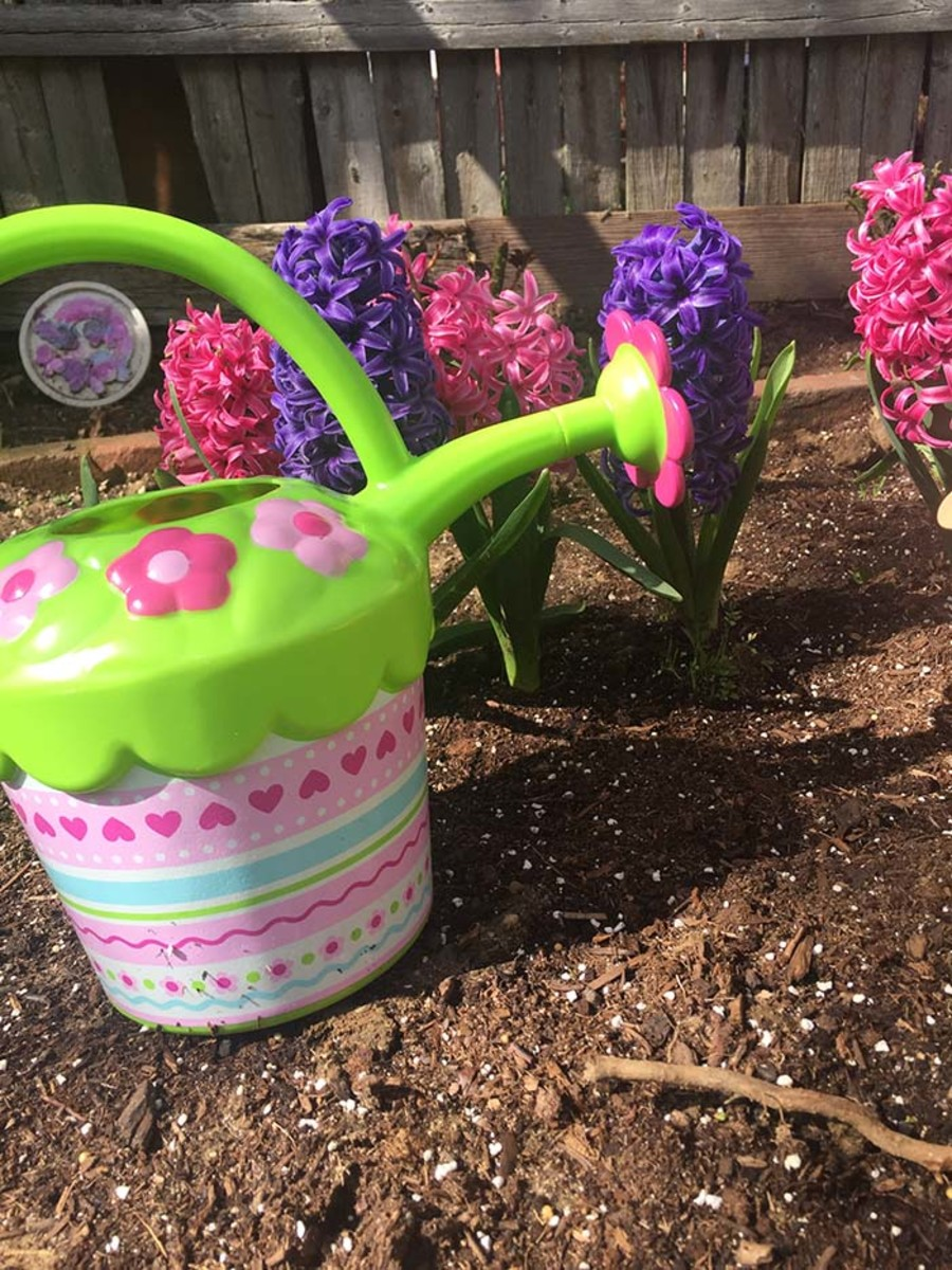 watering garden