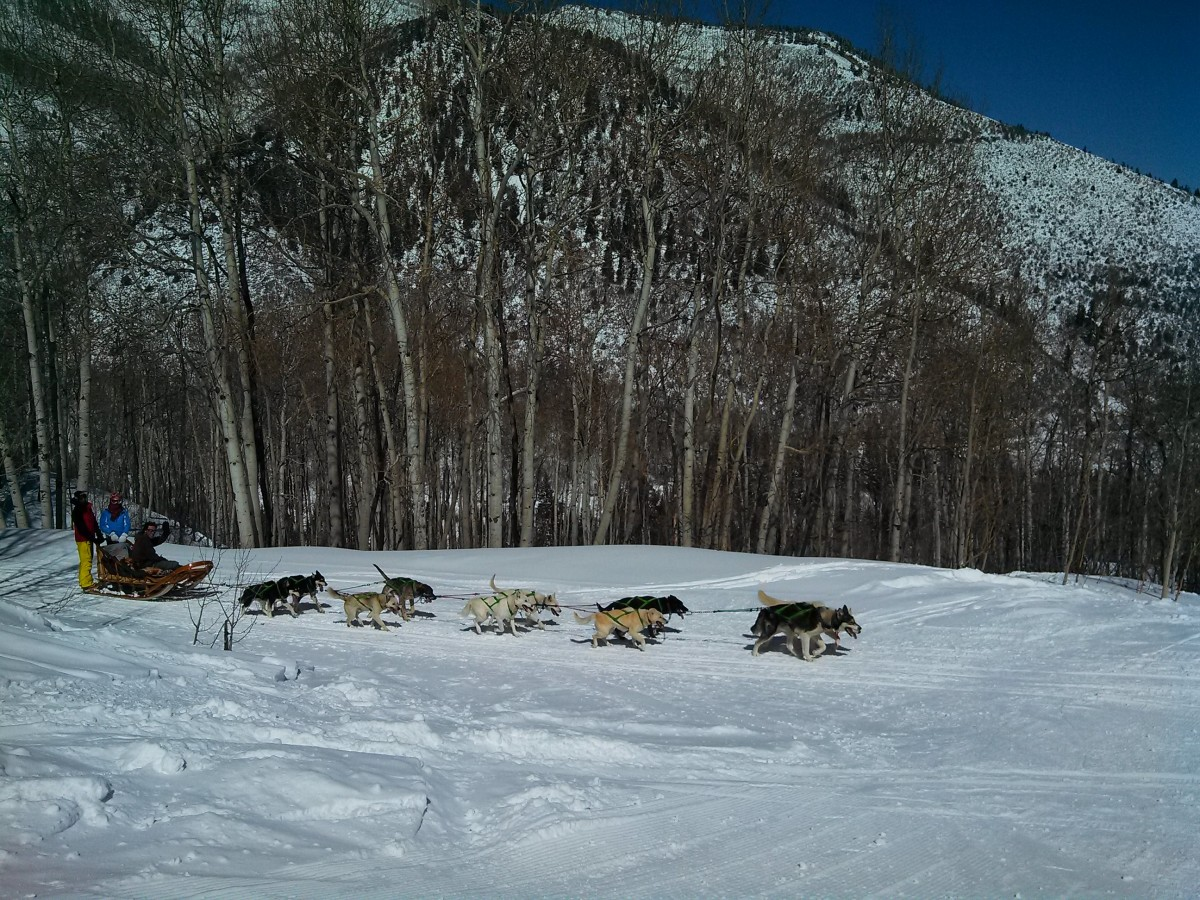 snowmass dog sledding