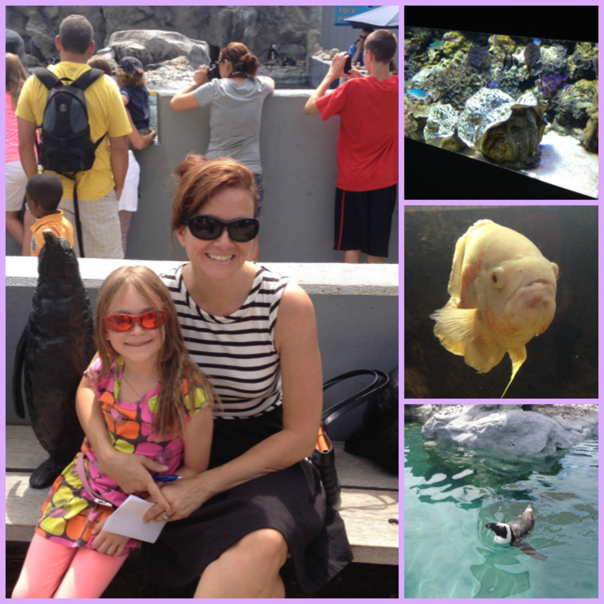 mystic aquarium Collage 1