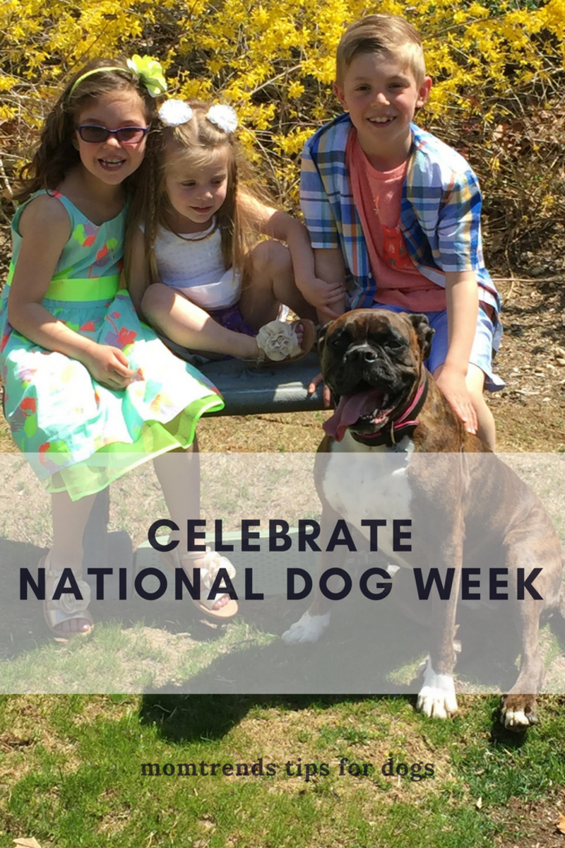 national dog week, dog week, celebrate dos, puppies, tips for dogs, caring for your dog, canine care, camp bow wow, mans best friend