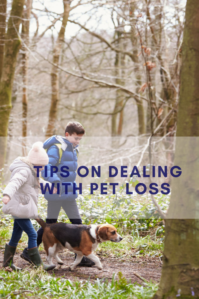 pet loss, tips for pet loss, how to deal with losing your pet,Ken Dolan-Del Vecchio, www.greengateleadership.com