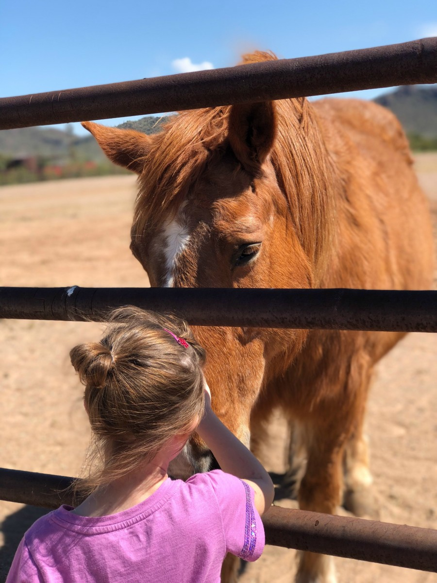 a little girl and her favorite brown horse