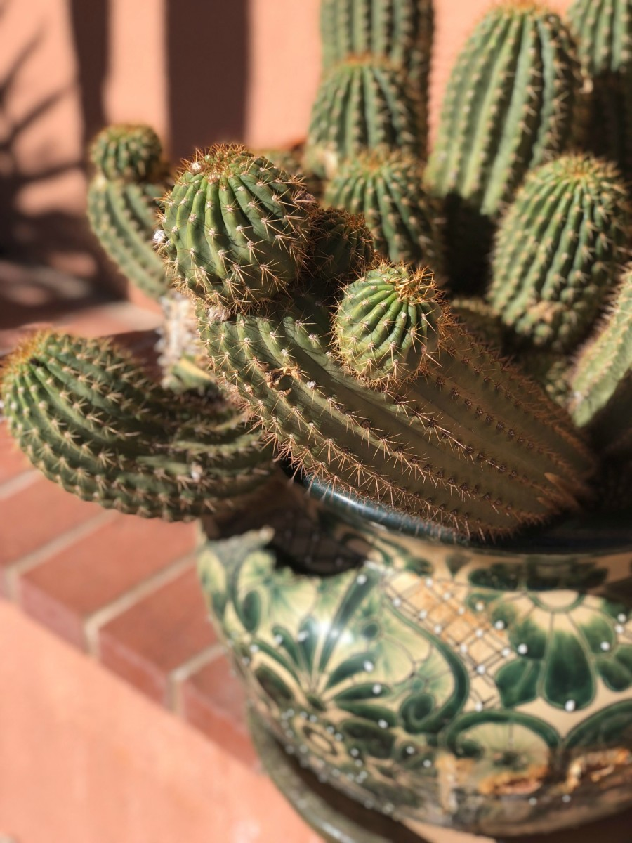 cactus at a dude ranch