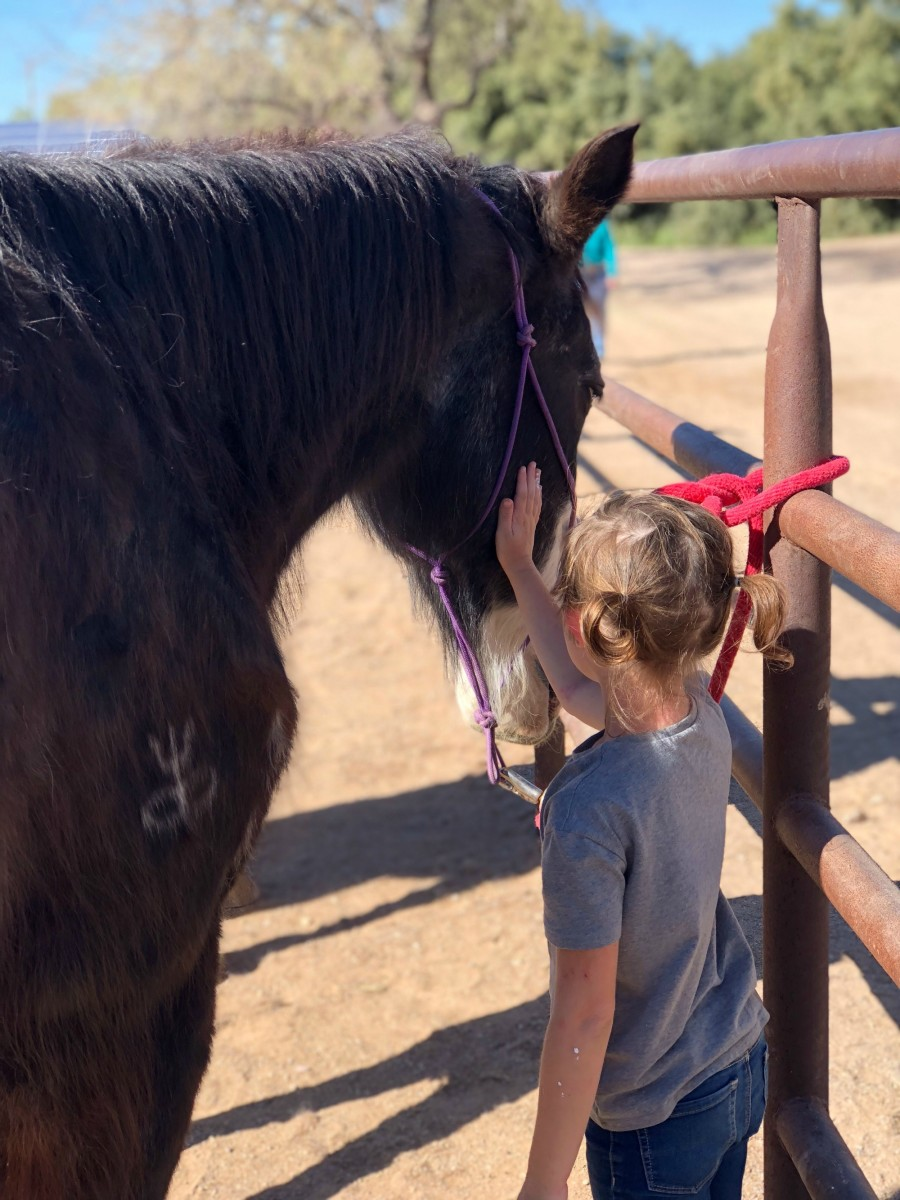 a girl saying goodbye to her horse