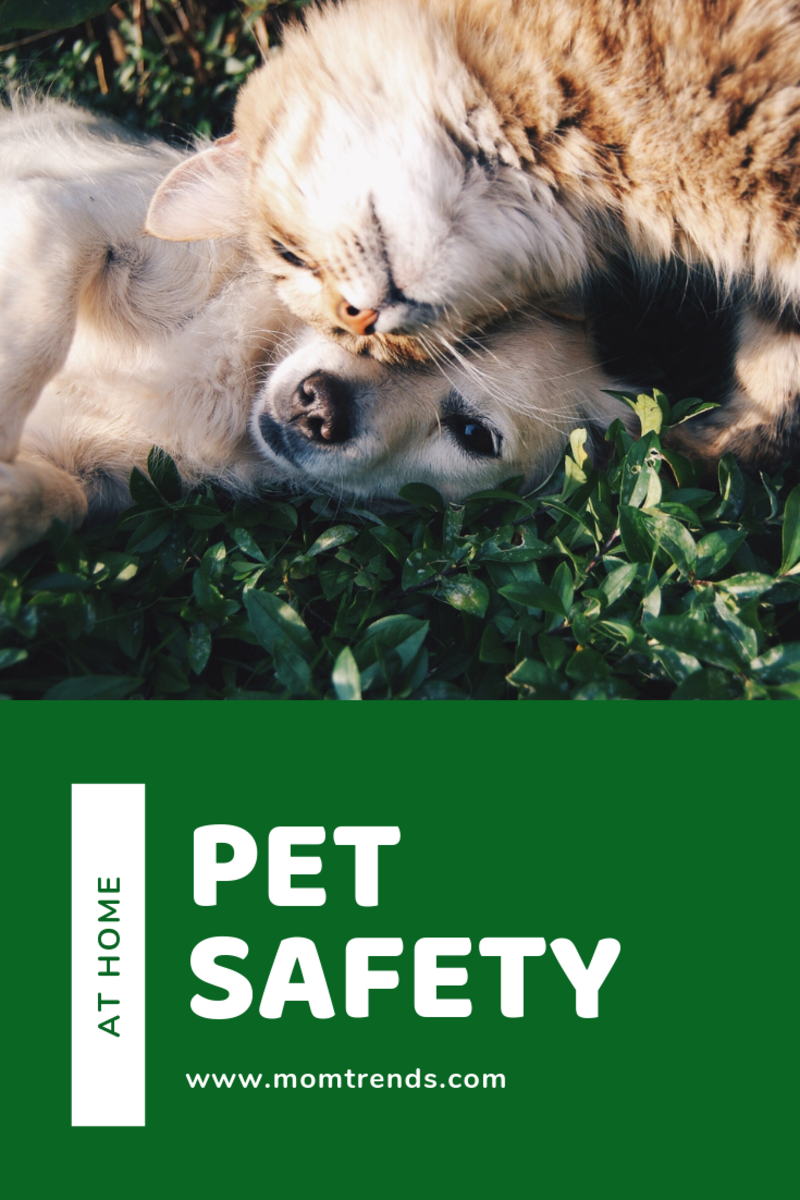 pet-safety