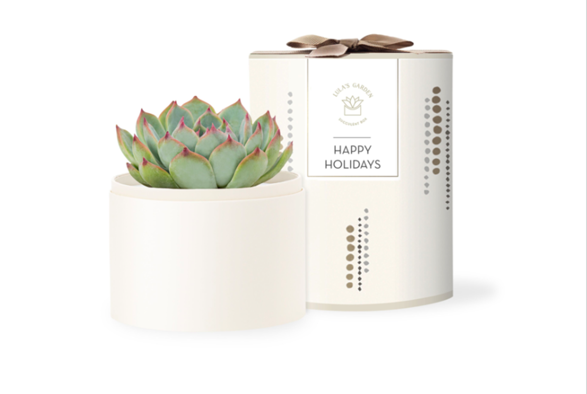 Lula's Garden is a succulent gifting company