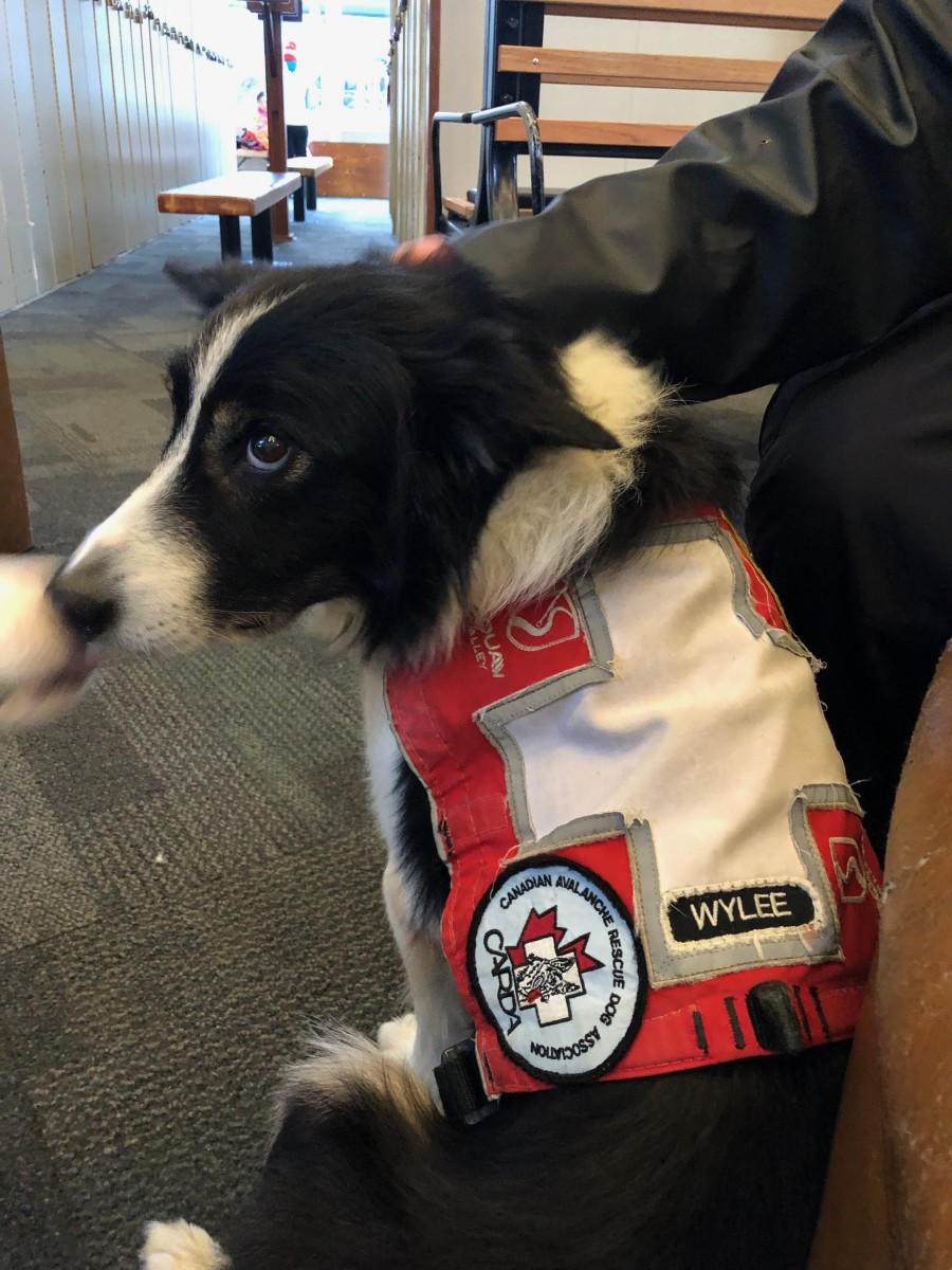 Squaw Alpine Rescue Dog