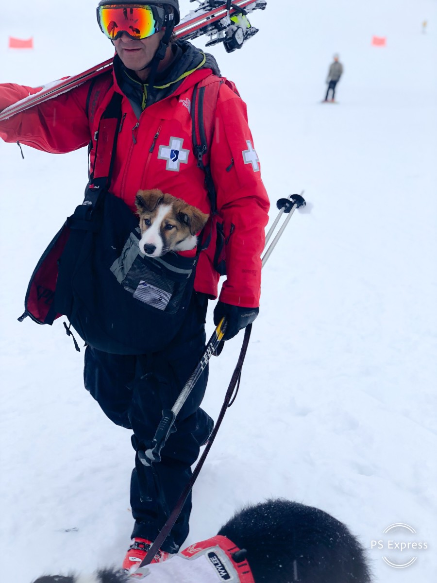 Squaw Alpine Rescue Dogs Program